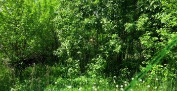 Кустарник и деревья на участке