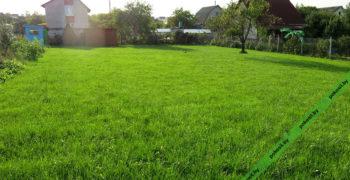 Газонная трава взошла