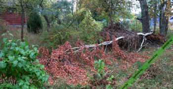 Заросший участок и поваленное дерево