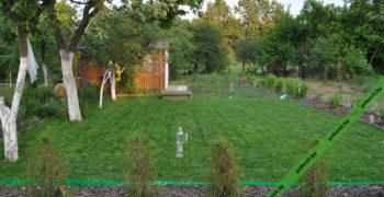 Газонная трава на участке