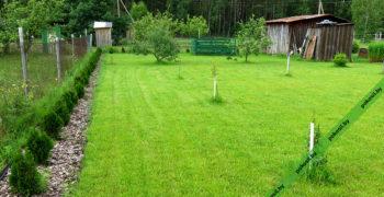 Постриженный газон
