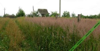 Заросший травой и бурьяном участок