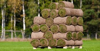 Доставленный газон в рулонах